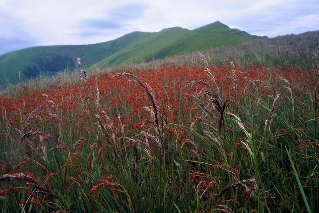 Zdj�cia: Po�onina Bor�awa, okolice Stoha, Karpaty Wschodnie, Beskidy Po�oni�skie, Mgli�cie i kwieci�cie, UKRAINA