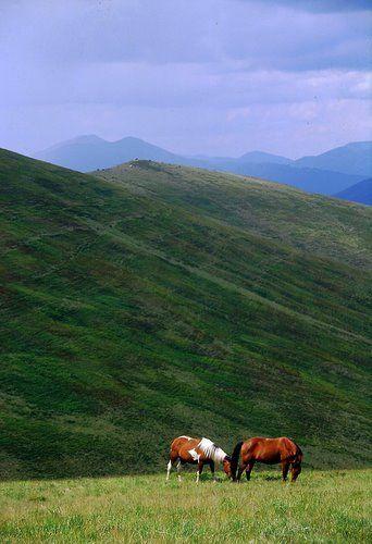 Zdjęcia: Połonina Krasna, Karpaty Wschodnie, Beskidy Połonińskie, Krajobraz indiański, UKRAINA