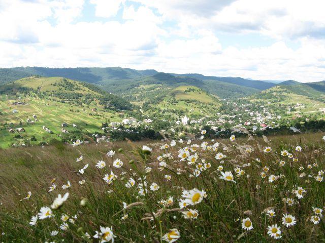 Zdj�cia: gdzie� w Karpatach :), zapach rumianku, UKRAINA