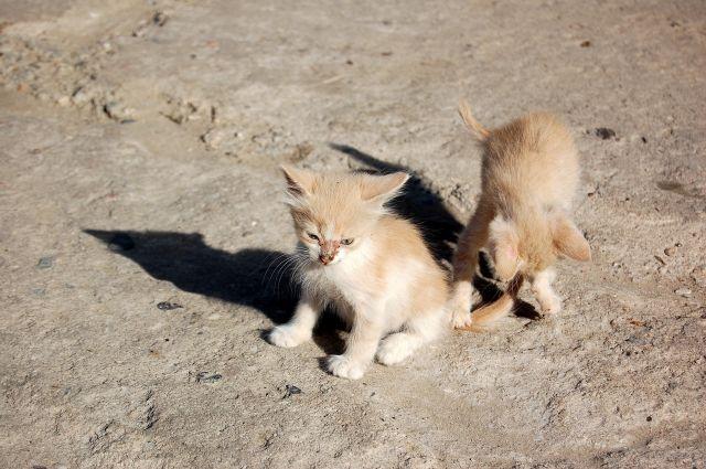 Zdjęcia: Bakczysaraj, Krym, Bakczysarajskie kociaki, UKRAINA
