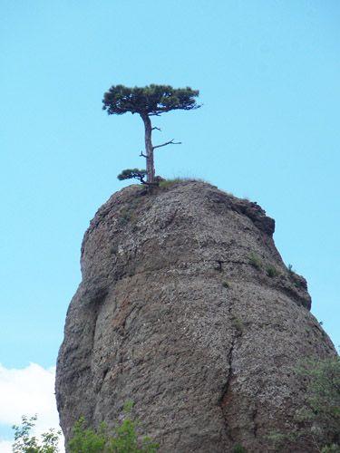 Zdjęcia: Demerdży, Krym, Drzewo, UKRAINA