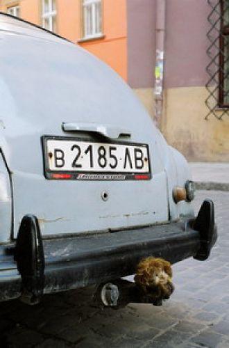 Zdjęcia: Lwów, Auto, UKRAINA