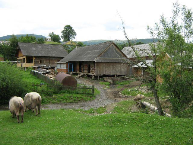 Zdjęcia: karpaty, karpaty, Prawdziwa Wieś, UKRAINA