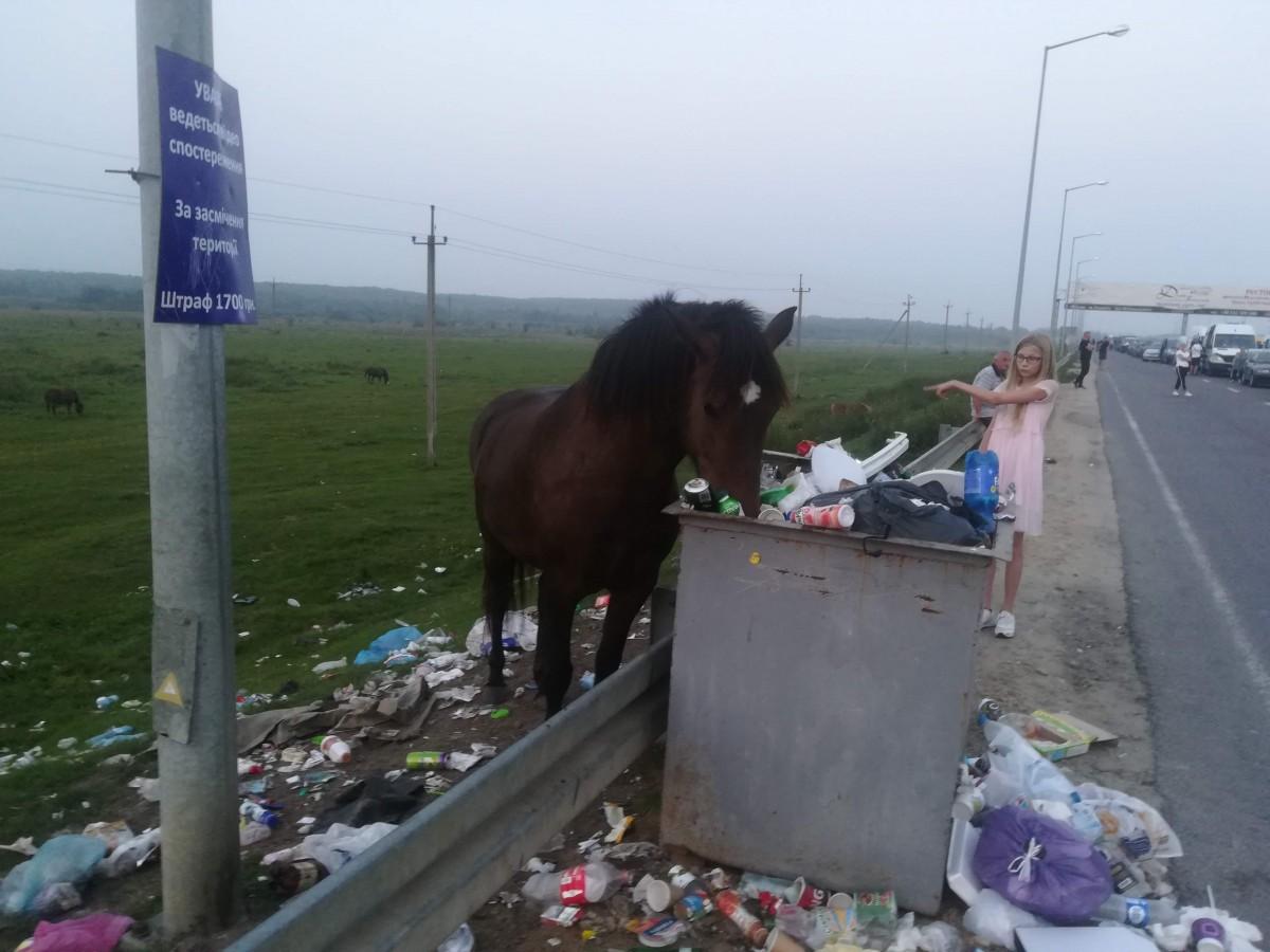 Zdjęcia: granica PL-UA, granica PL-UA, paśnik?, UKRAINA