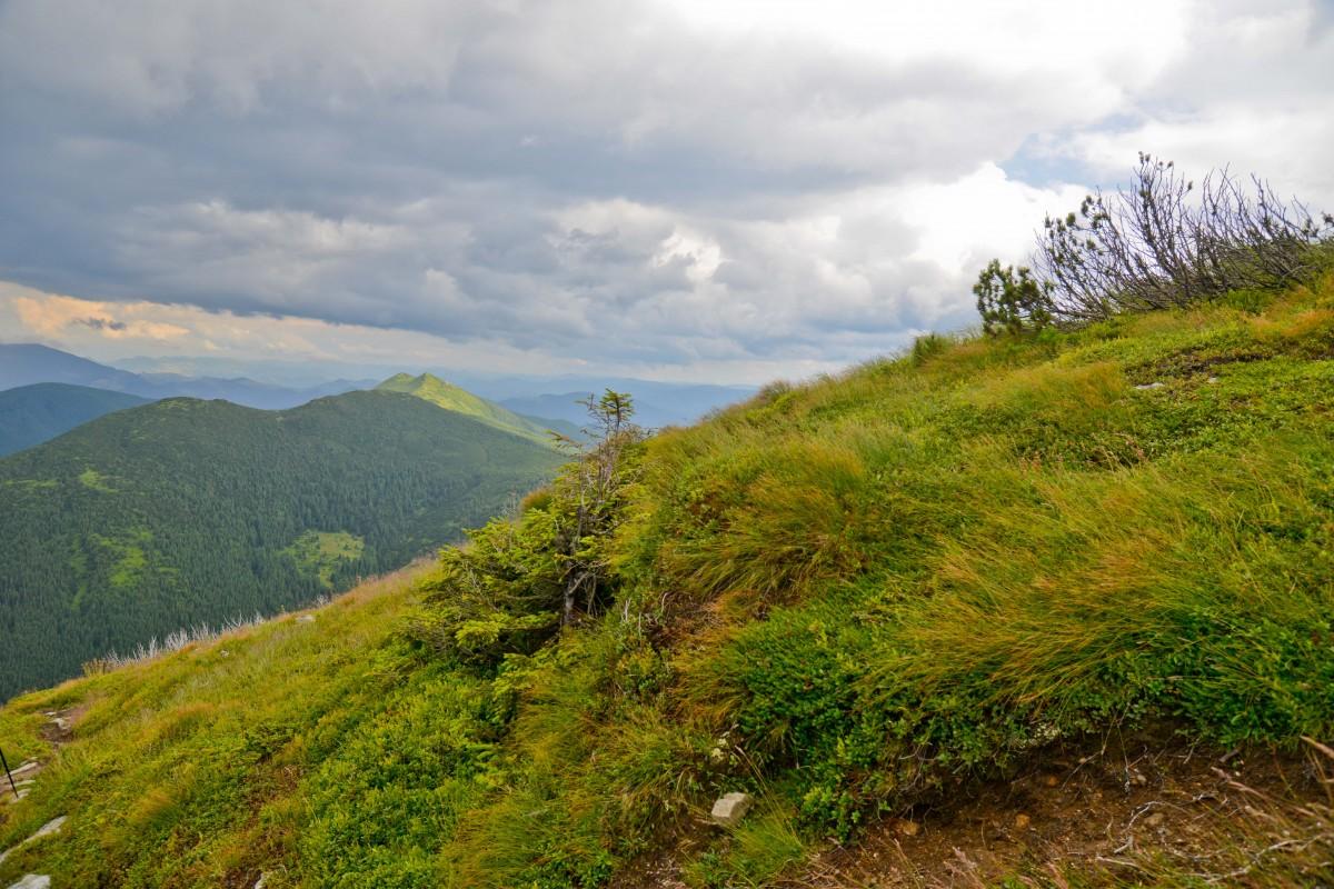 Zdjęcia: Czarnogóra, Karpaty Zachodnie, Na Smotryczu, UKRAINA