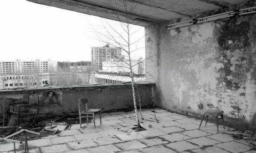 Zdjecie UKRAINA / - / strefa zero / Przyroda sięga