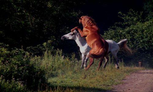 UKRAINA / - / Za Użokiem / Konie na drodze T0722
