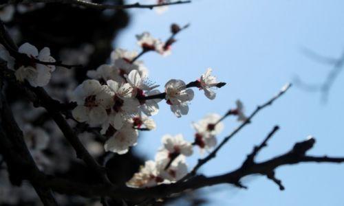 Zdjecie UKRAINA / Krym / Jaltą / Niech szybciej przyjdzie wiosna
