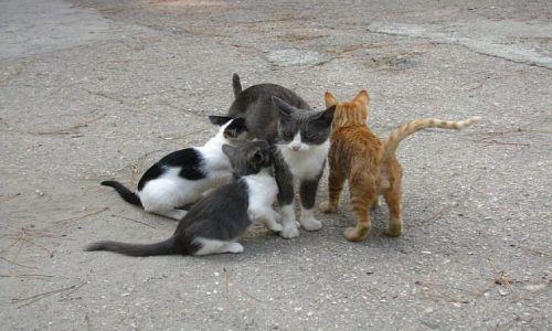Zdjecie UKRAINA / Krym / Kurortnoje/Masyw Kara-Dagu / dla miłośników kotów