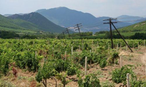 Zdjęcie UKRAINA / Krym / Sudak / Plantacje winorośli w okolicy Sudaka