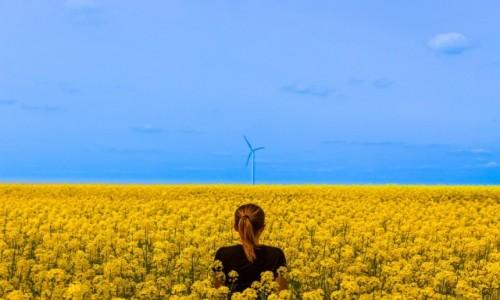 UKRAINA / Podole / Okolice Kamieńca Podolskiego / Naturalna flaga Ukrainy