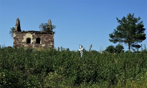 Zdjęcie UKRAINA / Obwód Tarnopolski / Czerwonogród / Cmentarz