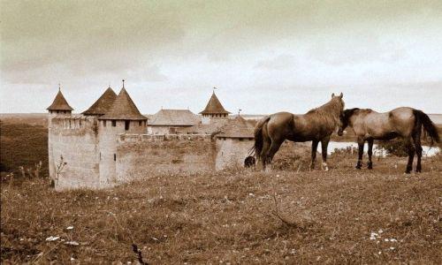 Zdjecie UKRAINA / brak / Chocim / Konie Husseina Paszy