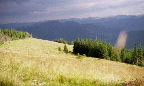 Zdjecie UKRAINA / Czarnohora / spod szczytu Skoruszny / pierwsze połoninki