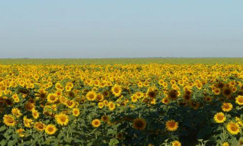 Zdjecie UKRAINA / Chersoń / ukraińskie bezkresne pola / pożegnanie lata