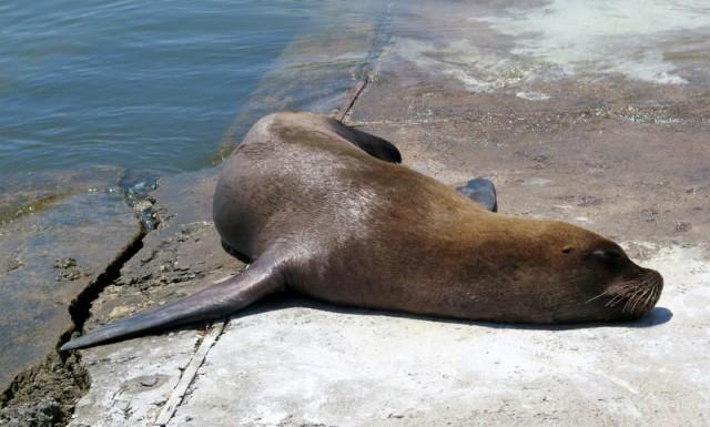 Zdjęcia: Punta del Este, Maldonado, Na brzegu - Punta del Este 2, URUGWAJ