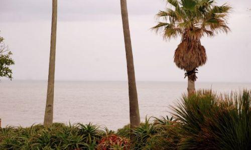 Zdjęcie URUGWAJ / Montevideo  / Montevideo  / palmowy view :)