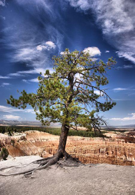 Zdjęcia: Bryce Canyon, Utah, Życie, USA