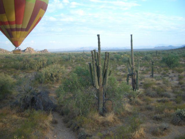 Zdjęcia: Arizona, kaktusy, USA