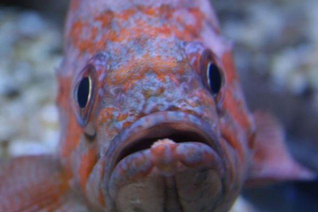 Zdjęcia: Myrtle Beach Aquarium, Południowa Karolina, Oko w oko, USA
