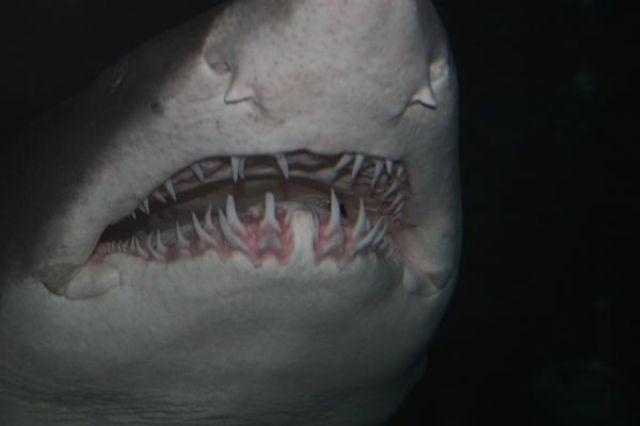 Zdjęcia: Myrtle Beach Aquarium, Południowa Karolina, w paszczy rekina, USA