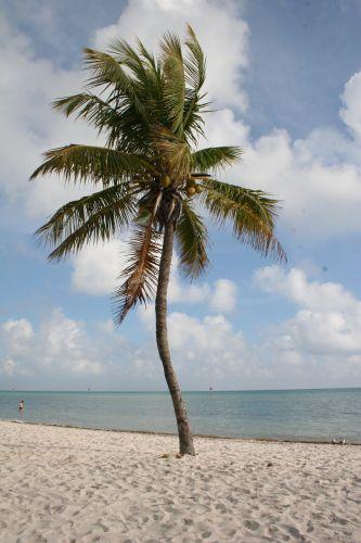 Zdjęcia: Key west, Floryda, Palma na plaży, USA