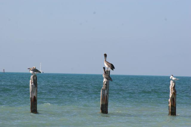 Zdjęcia: Floryda, Key West, ptasia siesta, USA