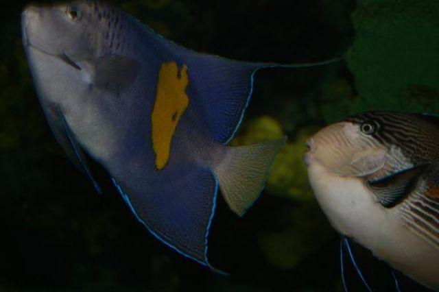 Zdjęcia: Myrtle Beach Aquarium, Południowa Karolina, Ryby, USA