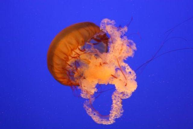 Zdjęcia: Myrtle Beach Aquarium, Południowa Karolina, cuda podwodnego swiata, USA