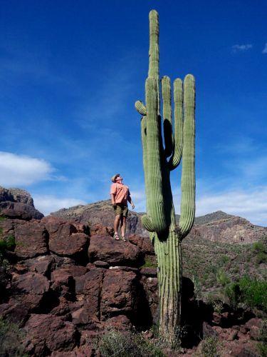 Zdjęcia: Arizona, kaktus Saguaro, USA