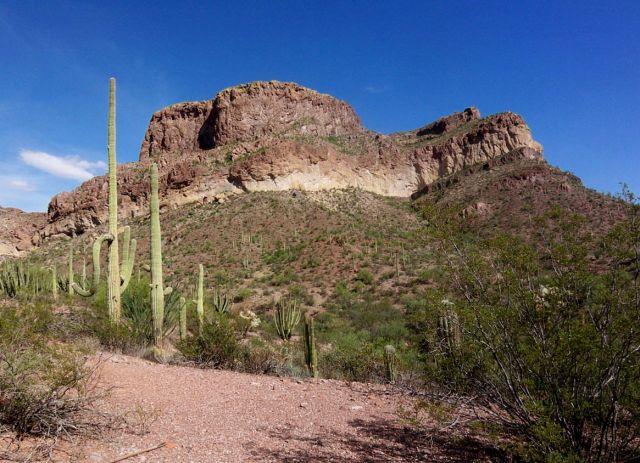 Zdj�cia: Arizona, pustynia Sonora, USA