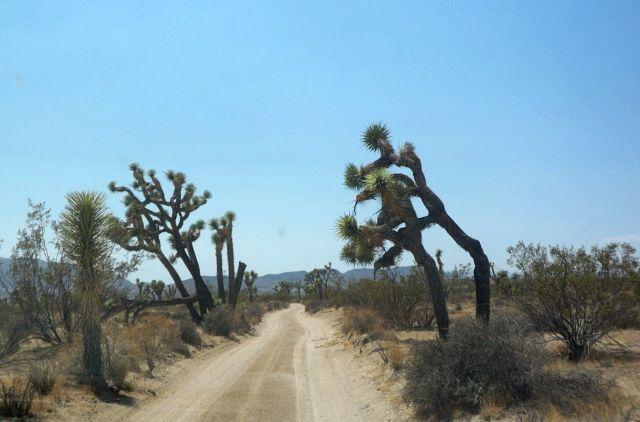Zdjęcia: Kalifornia, drzewka Jozuego 2, USA