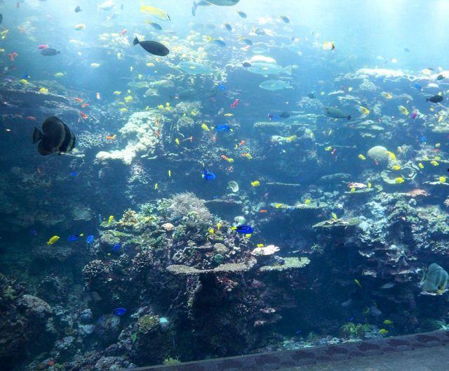 Zdjęcia: Georgia, akwarium a Atlancie 2, USA