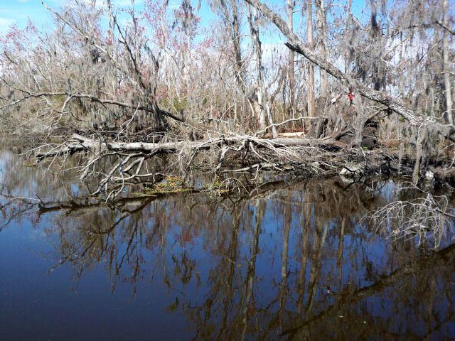 Zdjęcia: Luizjana, delta Mississippi, USA