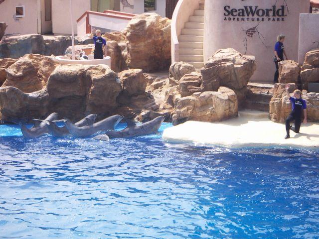 Zdjęcia: delfinarium, california, San Diego, USA