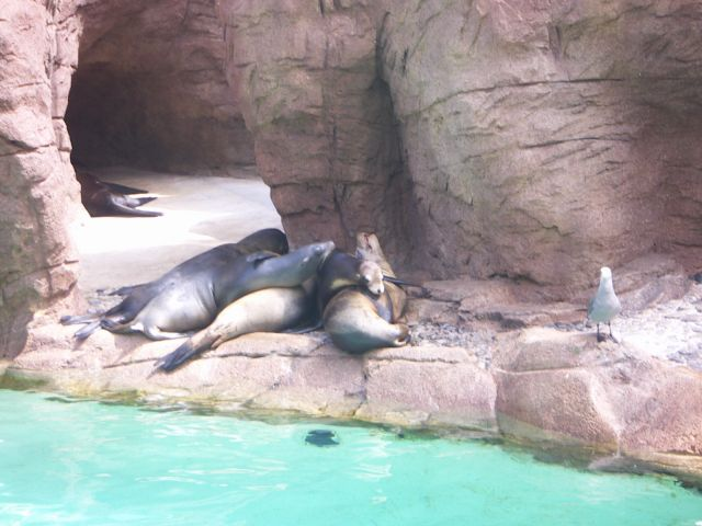 Zdj�cia: delfinarium, SAN DIEGO, USA