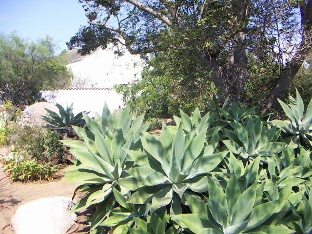 Zdjęcia: PARK NARODOWY JOSHUA TREE,  Zachodnie wybrzeże USA, Parki Narodowe USA, USA