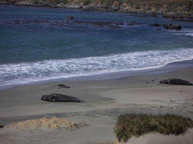Zdjęcia: San Francisco i dalej na południe, zachodnie wybrzeże, Przyroda Zachodniego Wybrzeża, USA