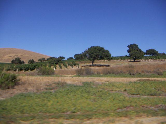 Zdj�cia: San Francisco, zachodnie wybrze�e, Przyroda Zachodniego Wybrze�a, USA