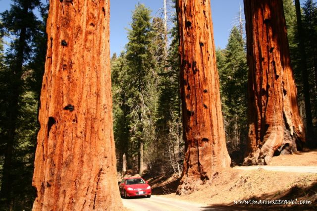 Zdjęcia: Kalifornia, Kalifornia, Sekwoje, USA