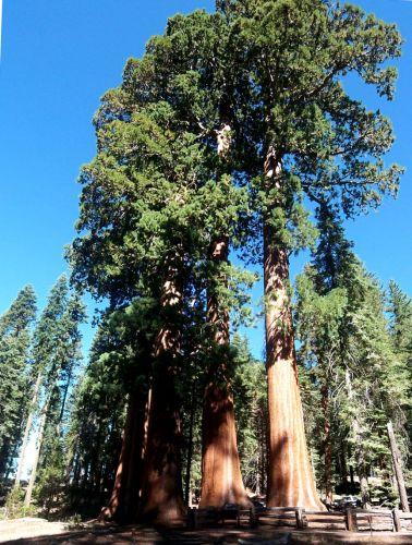 Zdjęcia: Kalifornia, Sekwoje, USA