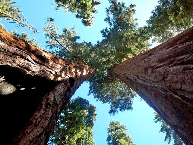 Zdjęcia: Kalifornia, Sekwoje z innej perspektywy, USA
