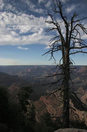 Zdjęcia: Grand CanyonNP, Arizona, Drzewo, USA