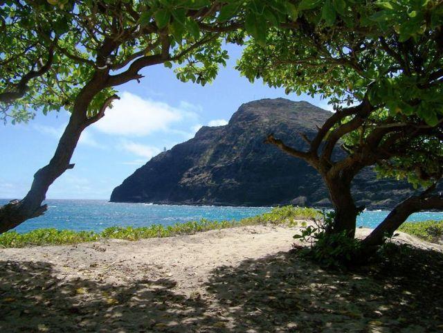 Zdjęcia: Honolulu, Hawaii, Honolulu - Hawaii, USA