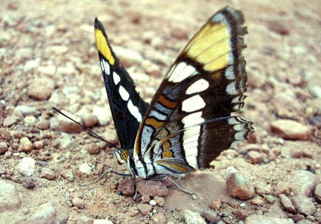 Zdjęcia: Zion National Park, Utah, motyl, USA