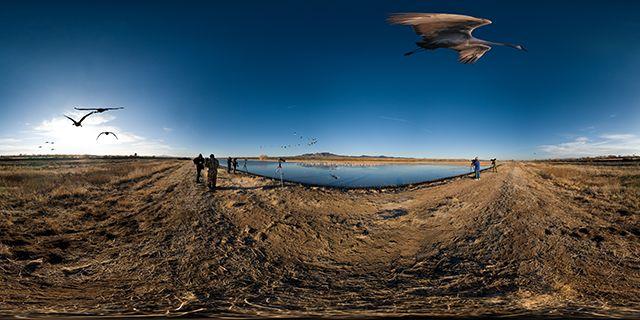 Zdjęcia: Bosque del Apache, New Mexico, Bosque del Apache, USA