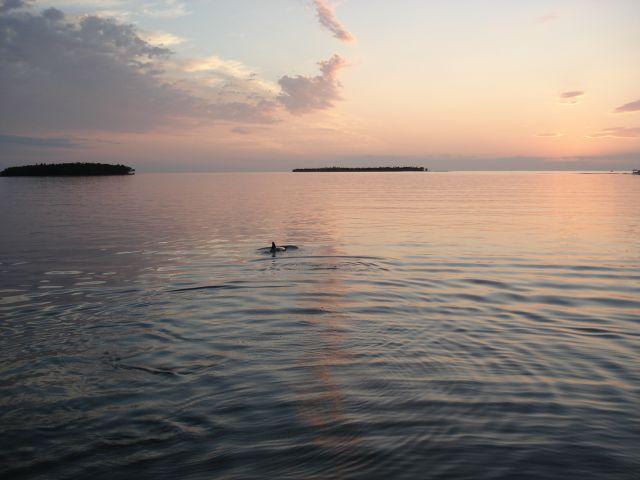 Zdjęcia: Park Narodowy Everglades, Floryda, Zatoka Meksykańska, USA