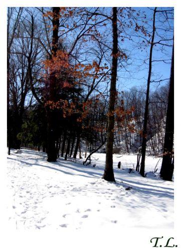 Zdjęcia: Cleveland, Cuyahoga, Cleveland Metropolitan Park 1, USA