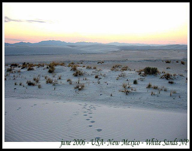 Zdjęcia: USA stan Nowy Meksyk, pustynia Biale Piaski w Nowym Meksyku, Biale Piaski - park narodowy w Nowym Meksyku, USA