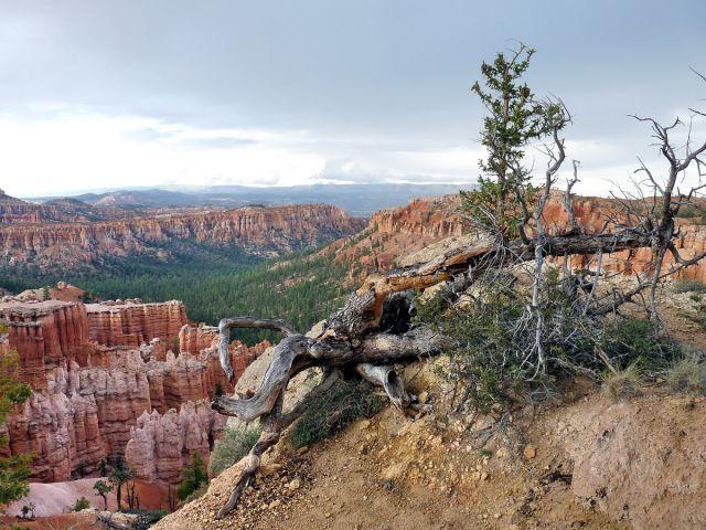 Zdjęcia: Bryce Canyon NP, Utah, Bryce Point w pochmurny dzień, USA